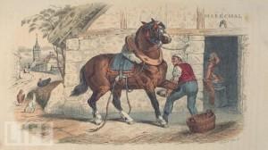 shoeinghorse