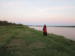 Ful (broad bean) fields after harvest, Ernetta island